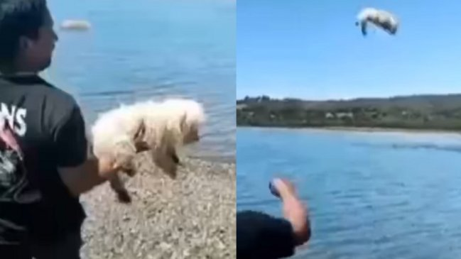 Lanza a un perro al mar c5XMAAFlyF