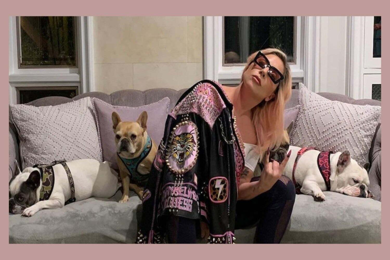 lady gaga perros 65